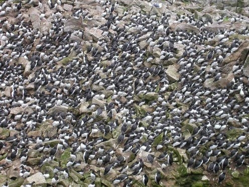 Worst marine heatwave on record killed one million seabirds in North Pacific Ocean - EconoTimes