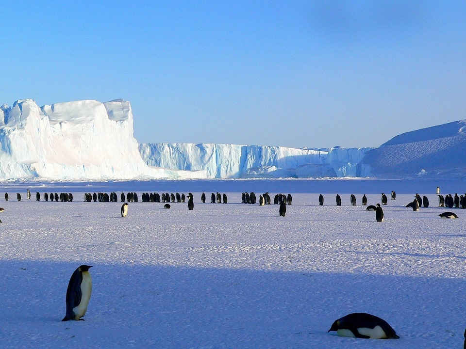 Antarctica: Scientists discover fossil of 40 million-year-old animal - EconoTimes